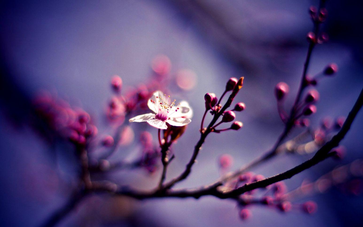 50 Free Spring Wallpaper Hd For Desktop Magazino1 - Nature Close Ups Flowers - HD Wallpaper