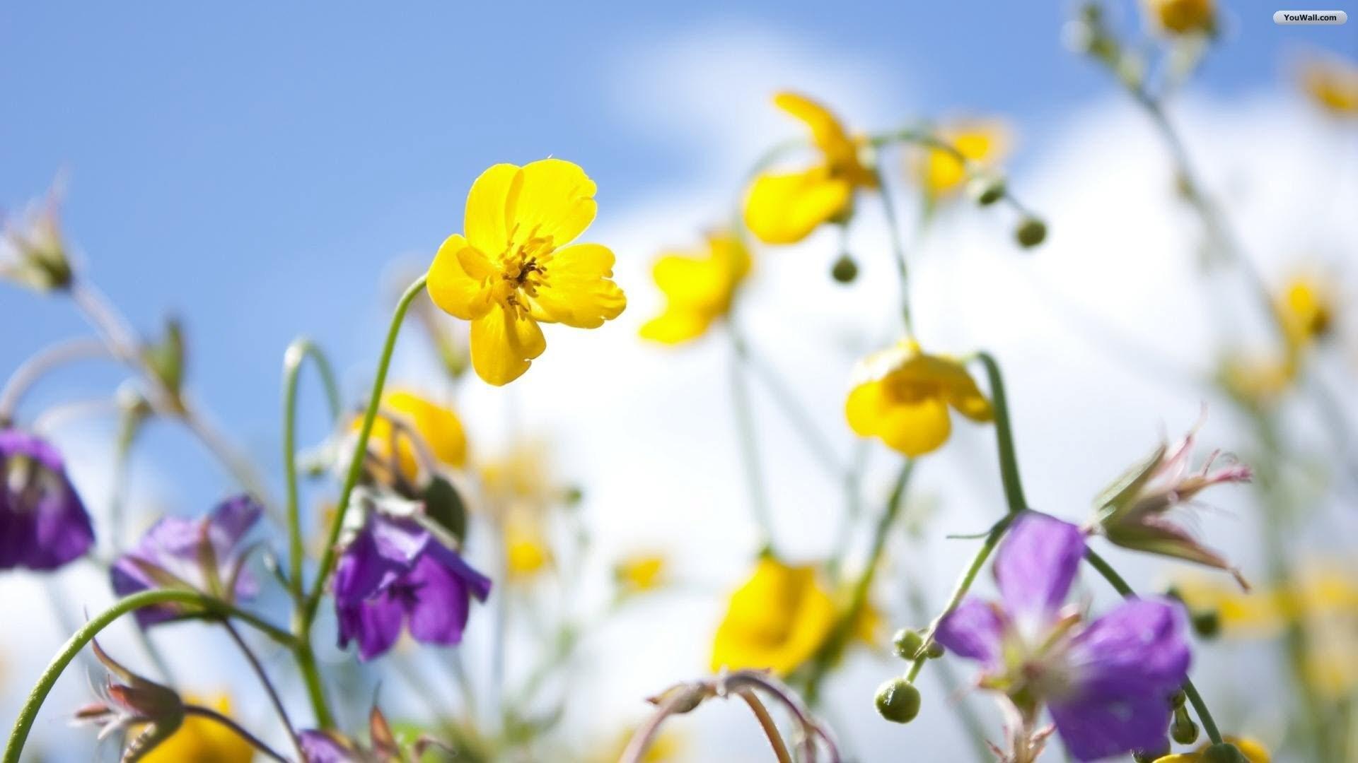 Spring Flower Desktop Background Wallpapertag - Flower Desktop Hd Spring Background - HD Wallpaper