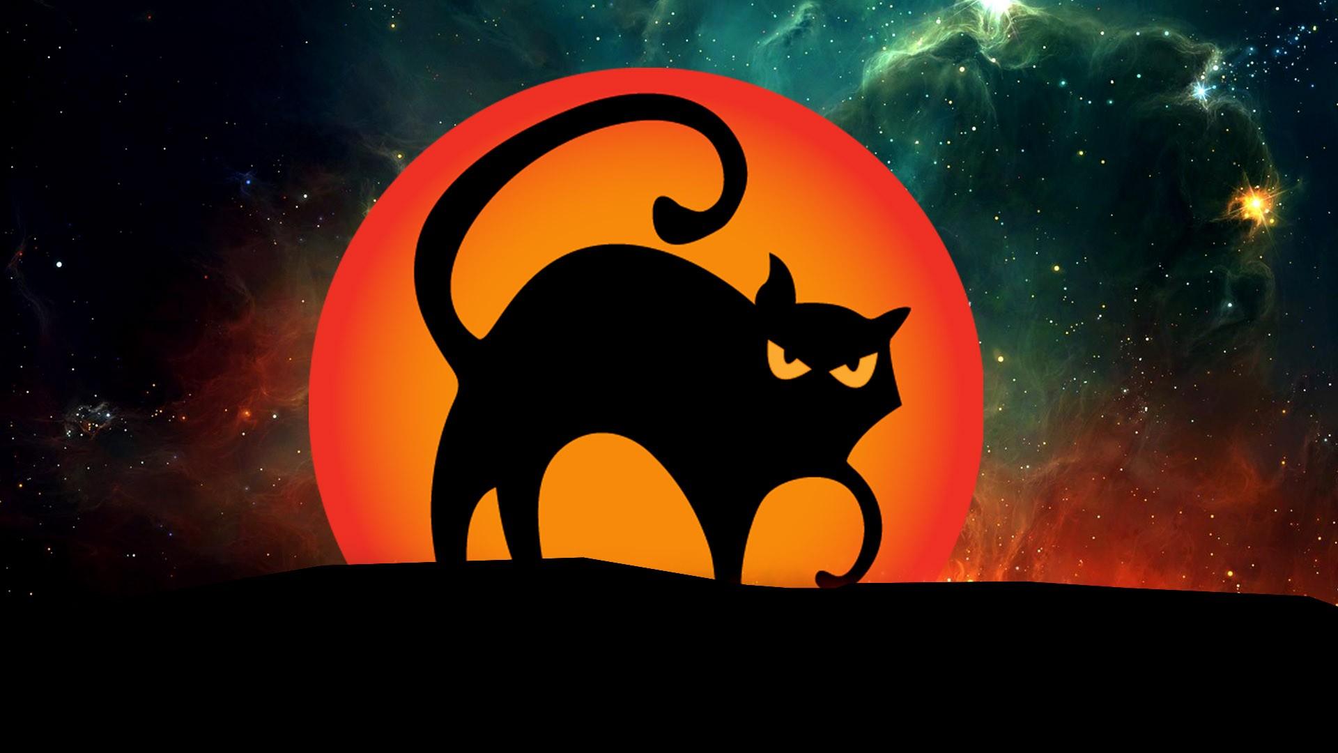 131 1314893 halloween black cat desktop hd wallpaper black cat