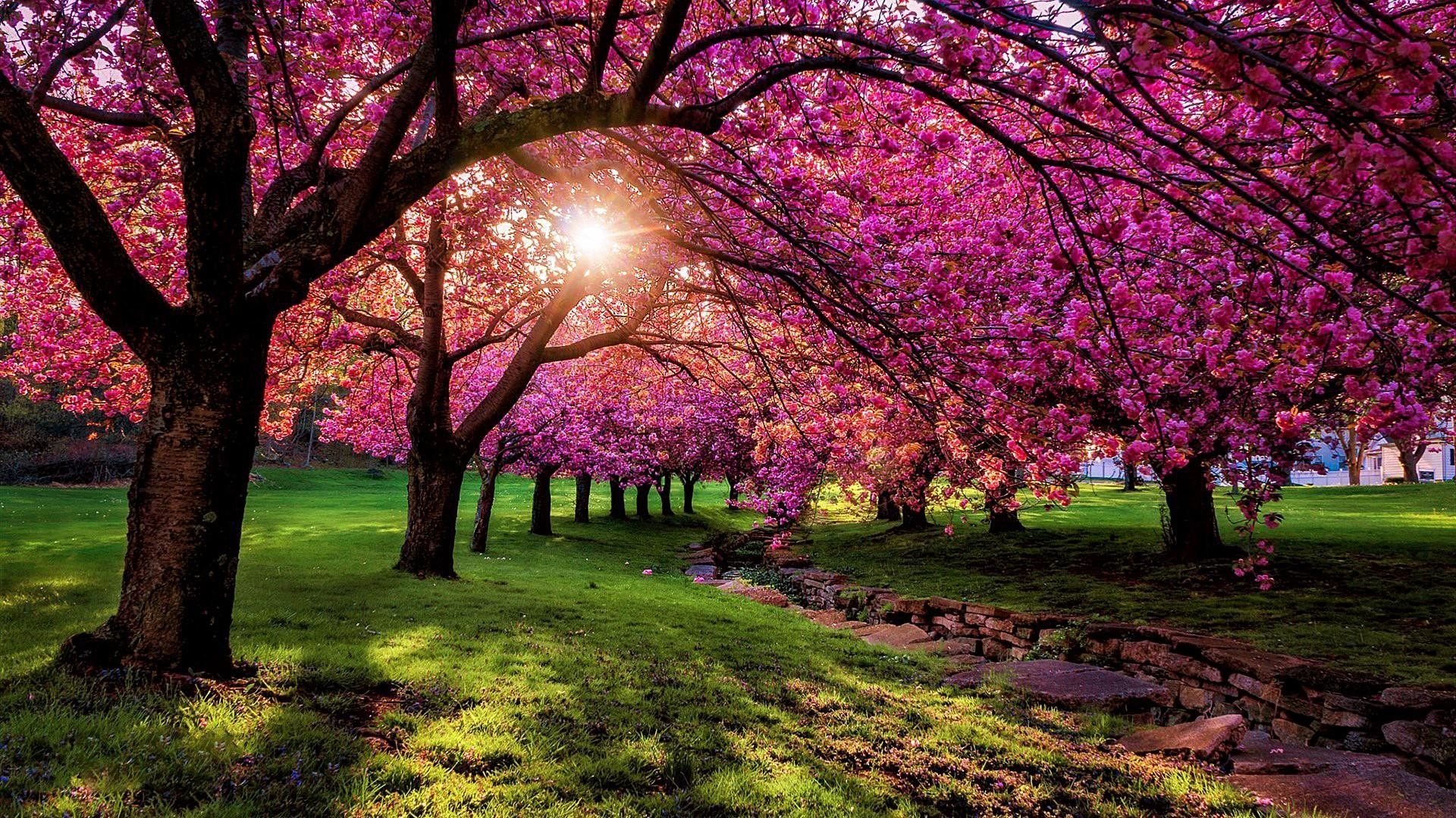 Spring Scenery Wallpaper Hd Wallpaper Bits   Data Src - Spring Scenery Wallpaper Desktop - HD Wallpaper