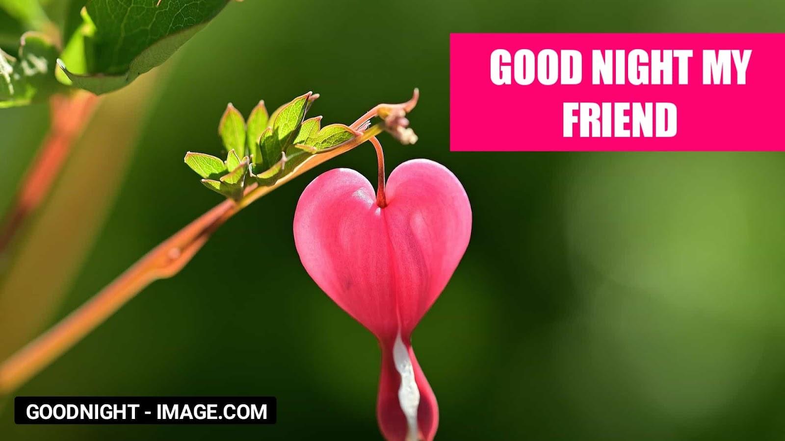 Beautiful Image For Dp - Love Friend Beautiful Good Night - HD Wallpaper