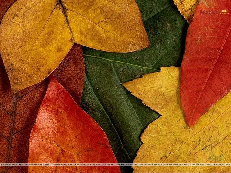 Different Colors - HD Wallpaper