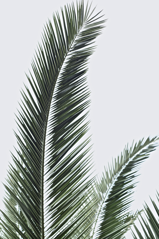 Iphone Wallpaper Palm Leaves   21x21 Wallpaper   teahub.io
