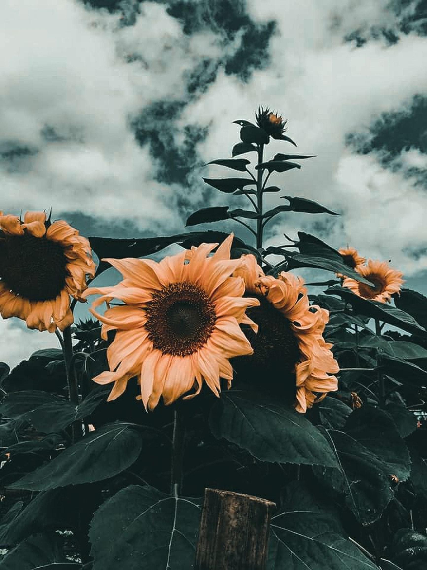 gambar bunga aesthetic hd
