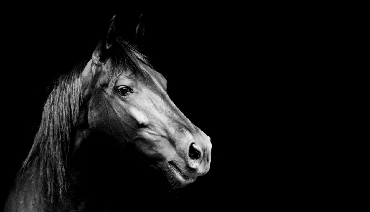Black Horse Wallpapers Nh139 Fhdq Wallpapers For Desktop Horse Hd Wallpapers Face 1256x721 Wallpaper Teahub Io