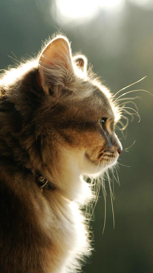 Nice Cat Iphone Wallpaper Cute Cats For Profile 640x1136 Wallpaper Teahub Io