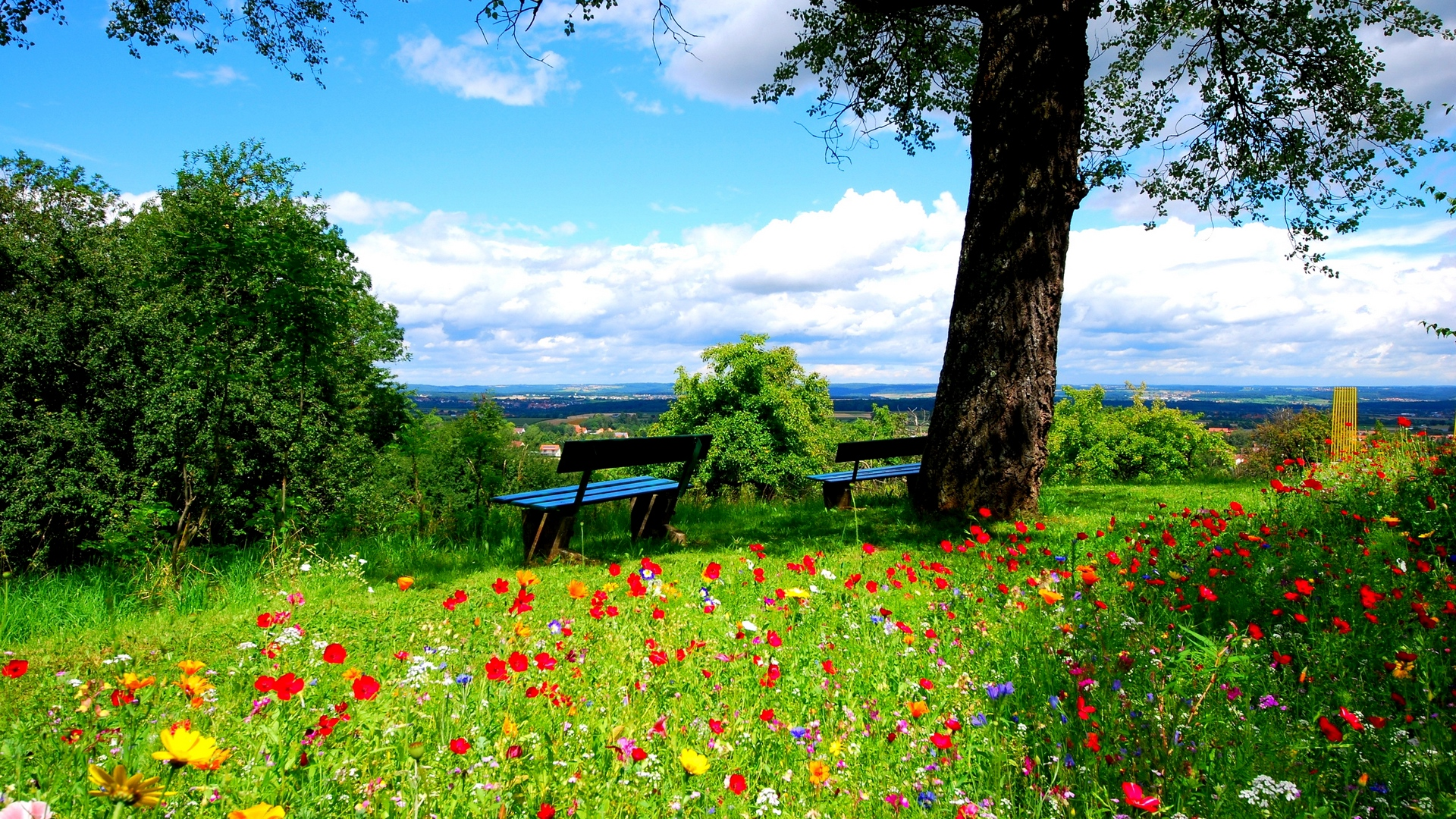 Wallpaper Trees, Benches, Flowers, Nature - Beautiful Nature Background Hd - HD Wallpaper