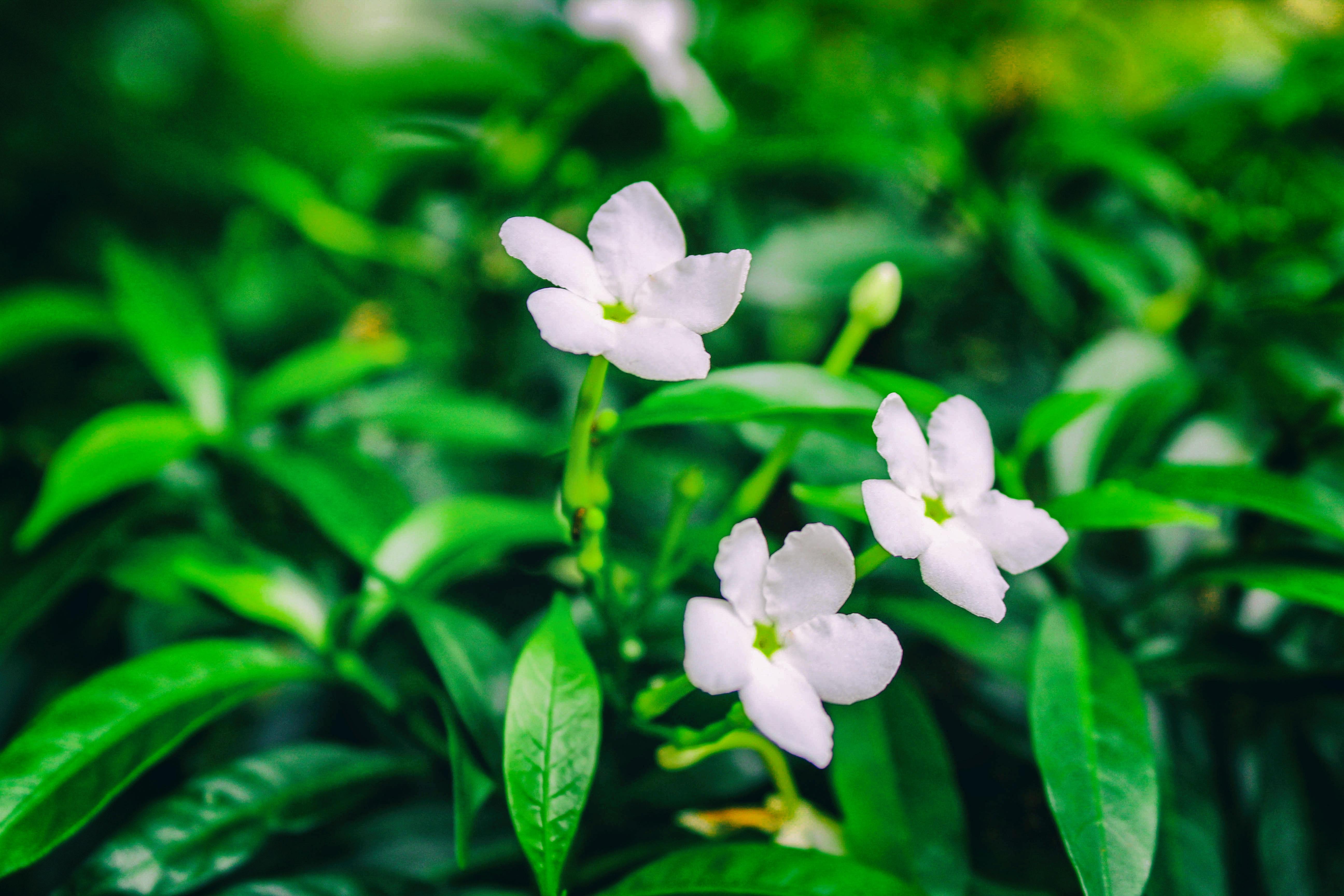 Flower Hd 5184x3456 Wallpaper Teahub Io