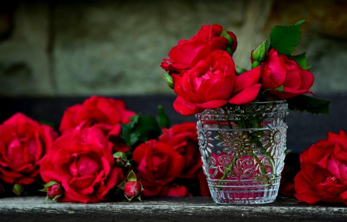 Hd Wallpapers Nature Flowers Rose 1203x770 Wallpaper Teahub Io
