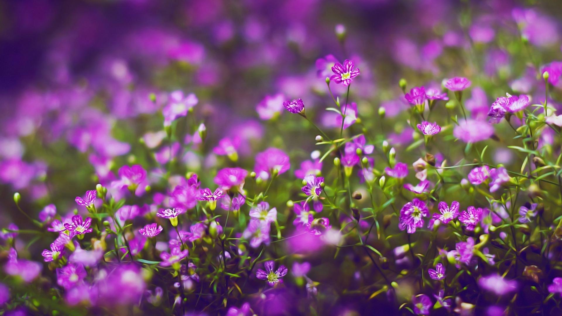 Flowers Desktop Background Hd 1920x1080 Wallpaper Teahub Io