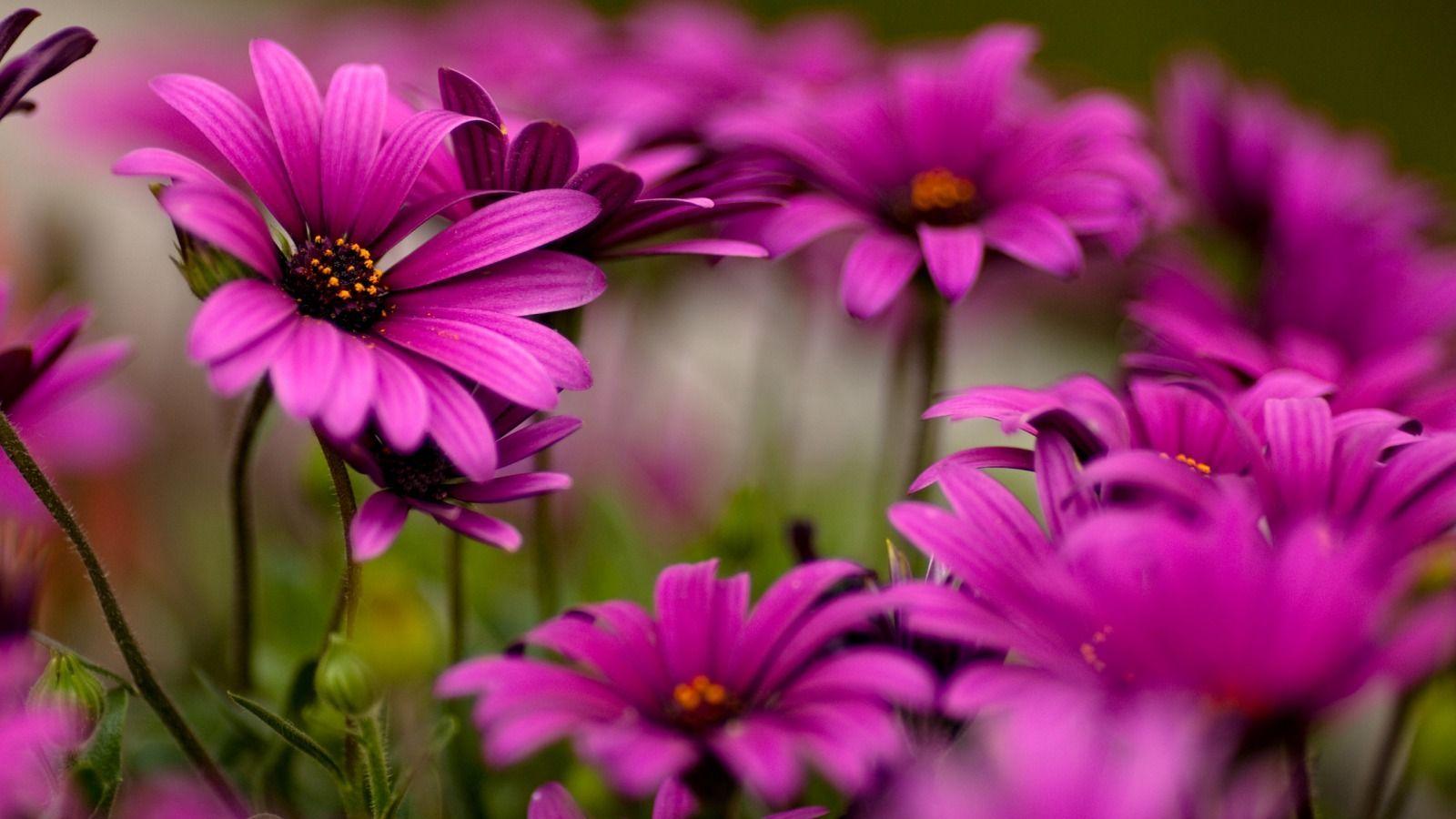 Desktop Flower Backgrounds Group   Data-src /img/252360 - Beautiful Wallpapers Of Flowers - HD Wallpaper