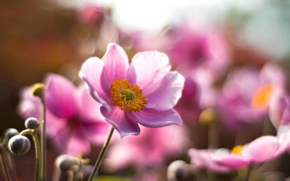 Summer Flower Wallpaper Desktop Pink Summer Flowers - Цветы Фото На Поле - HD Wallpaper