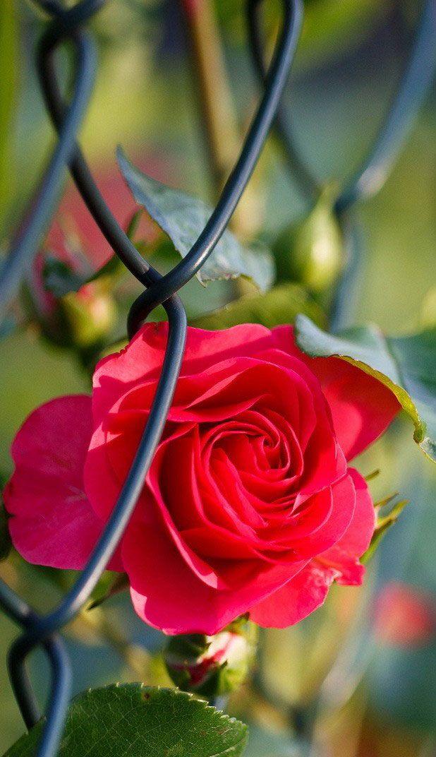 Full Hd Beautiful Flower 618x1072 Wallpaper Teahub Io