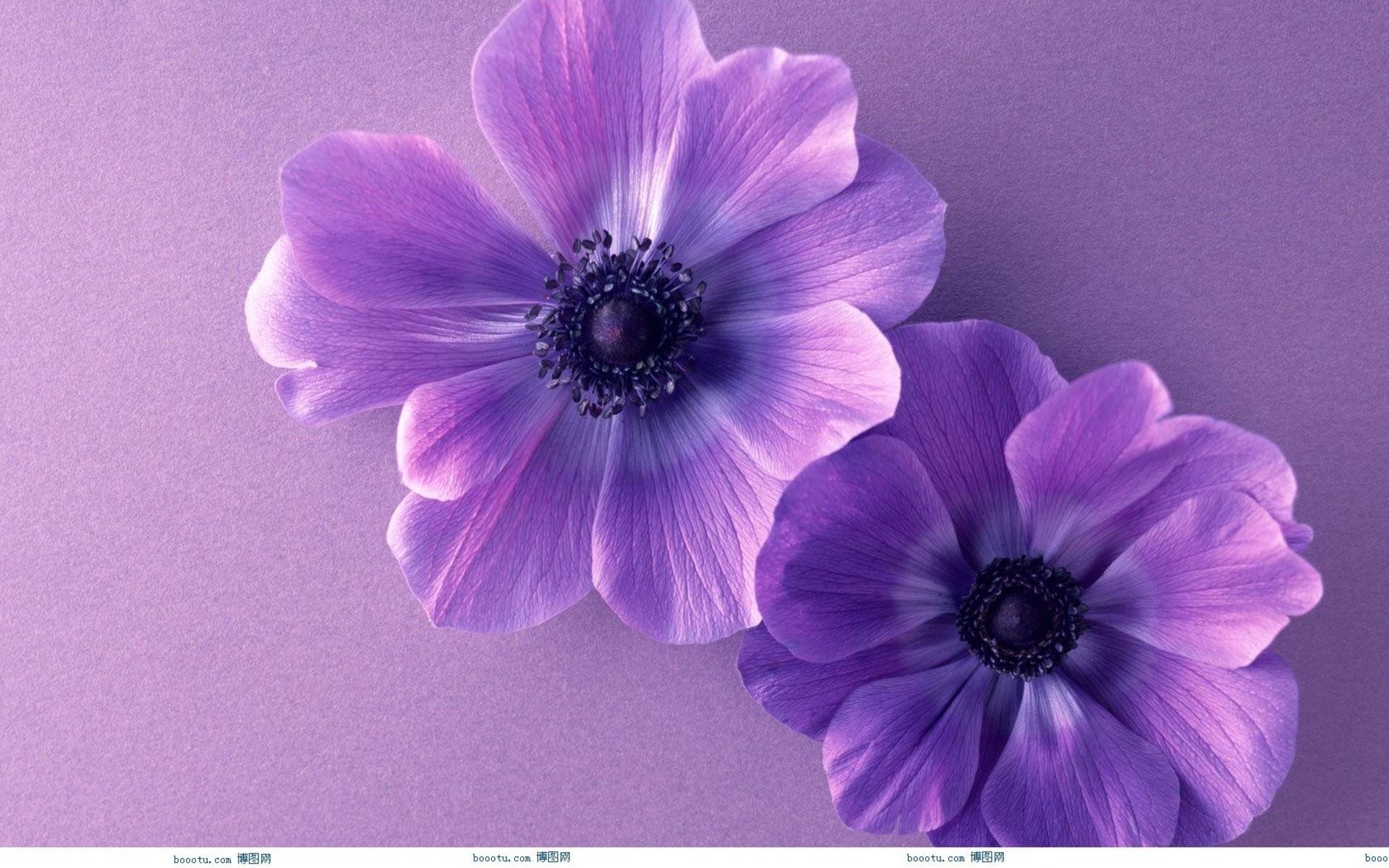 Cute Flower Wallpaper X   Data Src Free Download Cute - Background Flower Purple Hd - HD Wallpaper