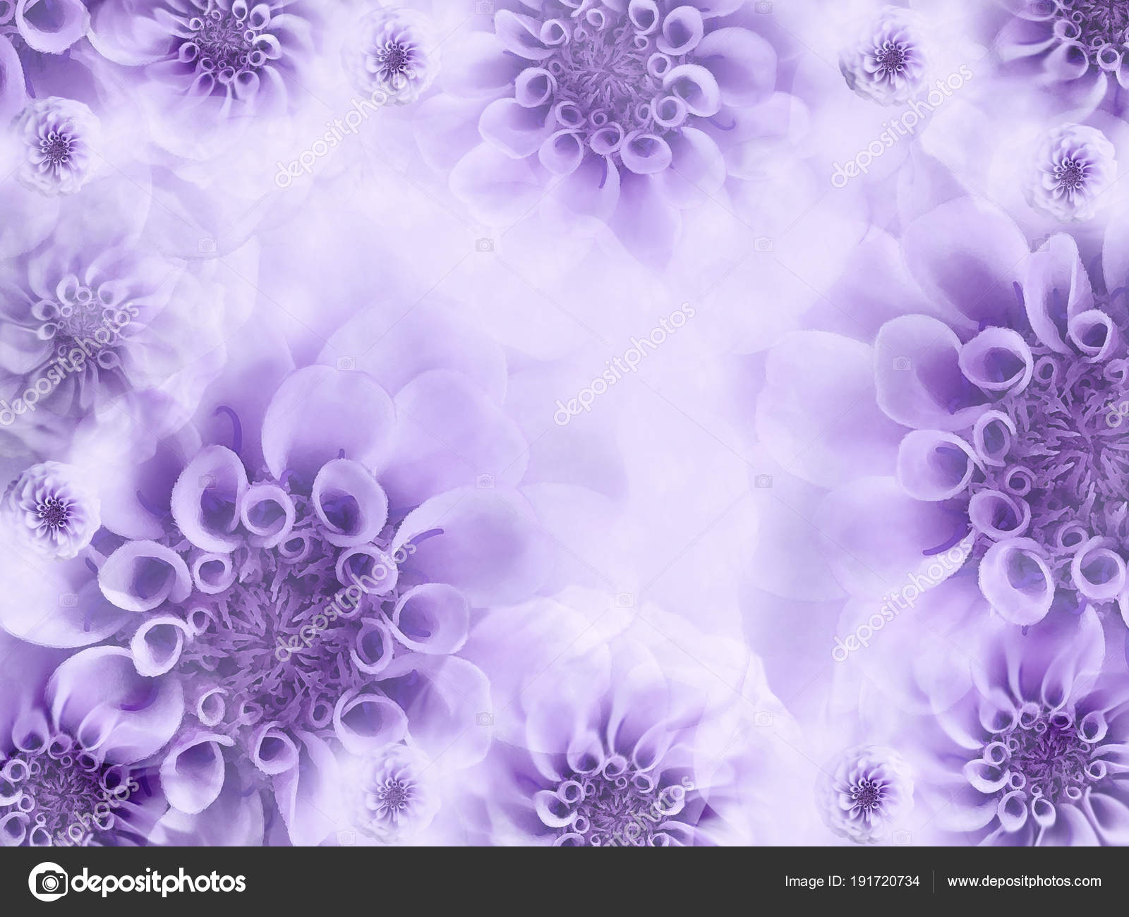 Light Purple Flower Background Floral Light Violet Background 1600x1300 Wallpaper Teahub Io