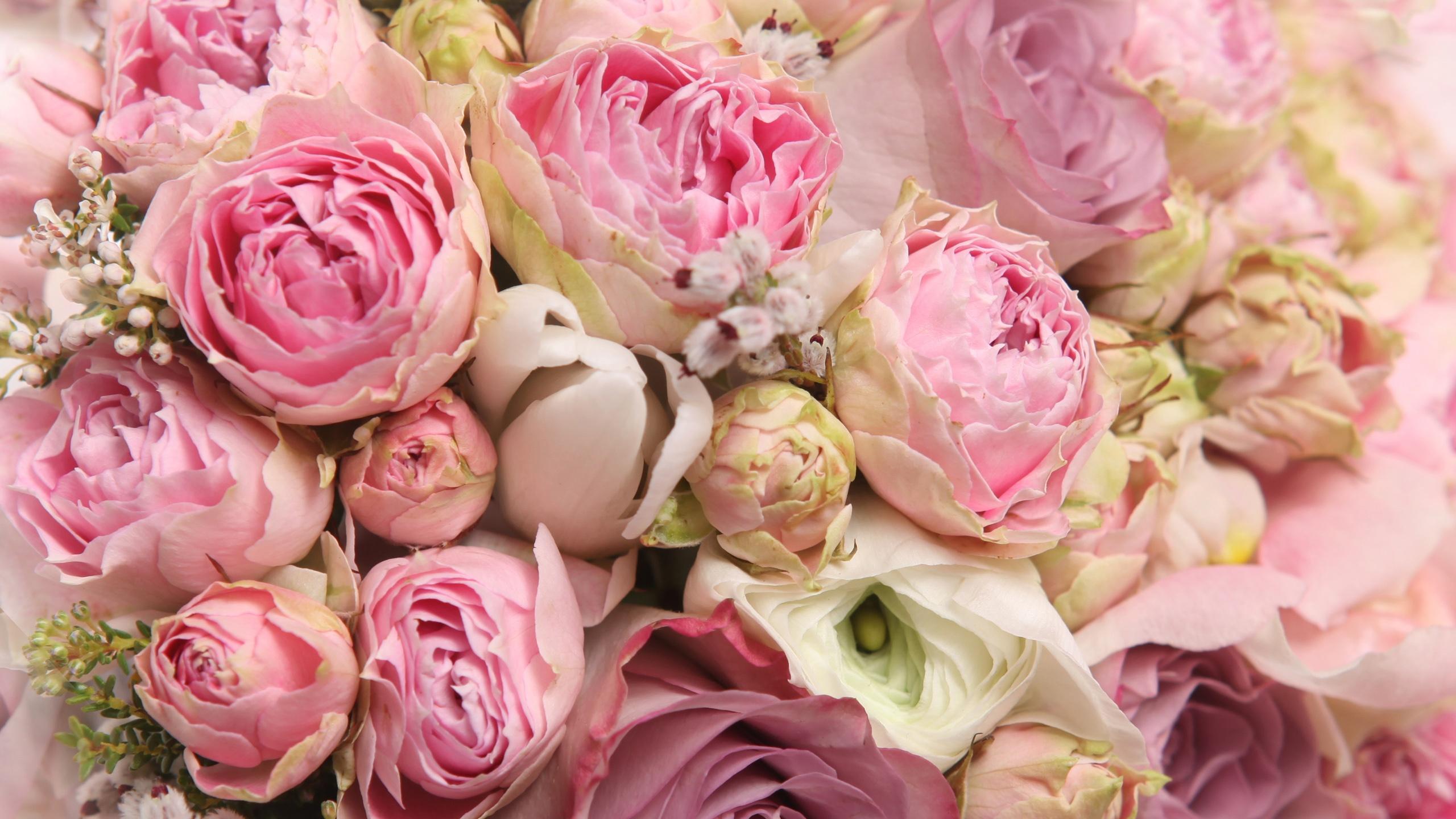 Rose Beautiful Rose Wallpaper Flowers - HD Wallpaper