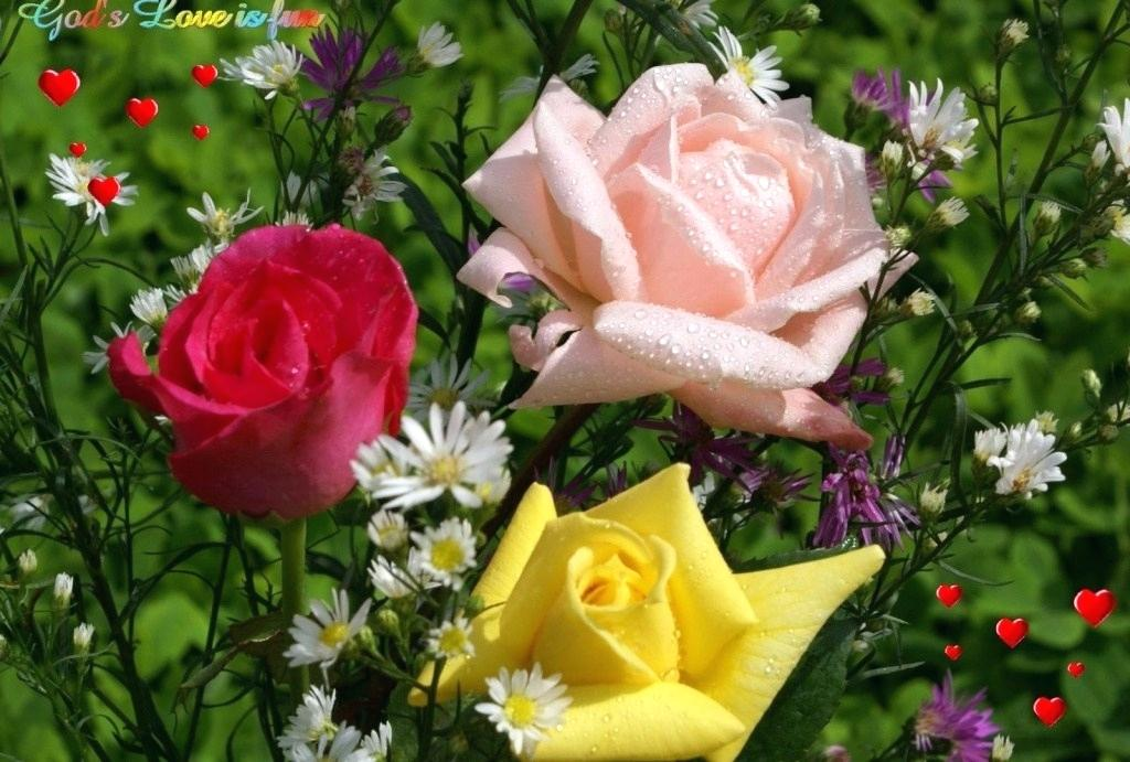 Decorating Ideas For 2019 9 Beautiful Rose Flower Wallpaper - Beautiful Flower Wallpaper Lovely Flower - HD Wallpaper