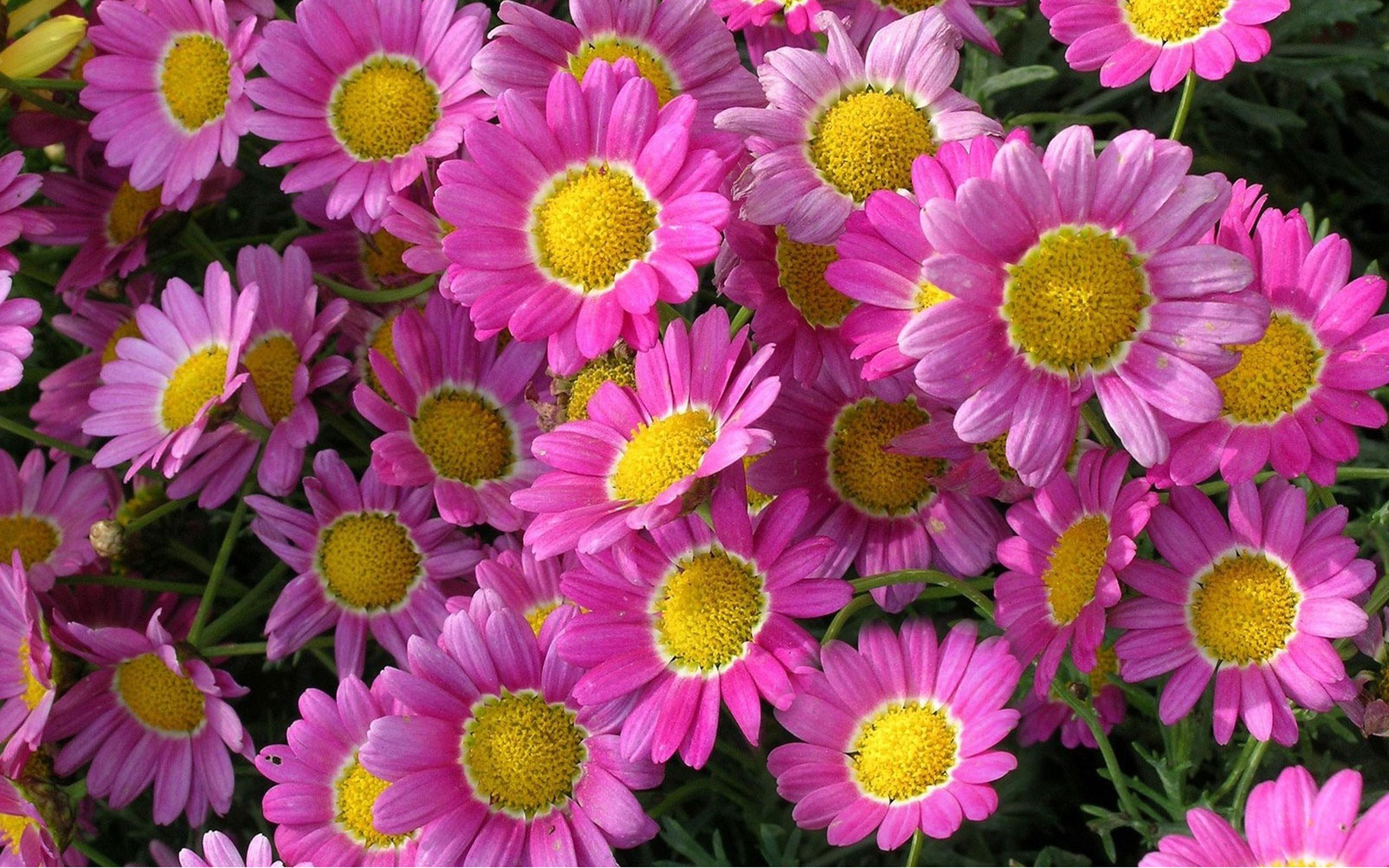 All Beautiful Flowers 2560x1600 Wallpaper Teahub Io
