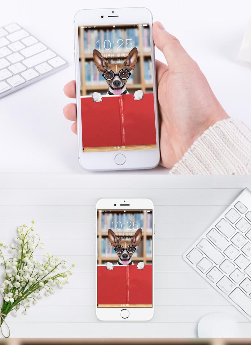Wallpaper Ponsel Hewan Peliharaan Yang Lucu - Обои Для Телефонп Подростковых - HD Wallpaper