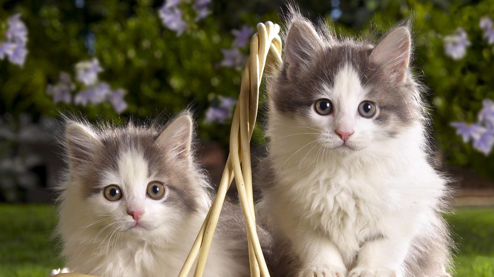 Wallpaper Gambar Hewan Lucu Ratuhumor - Cats - HD Wallpaper