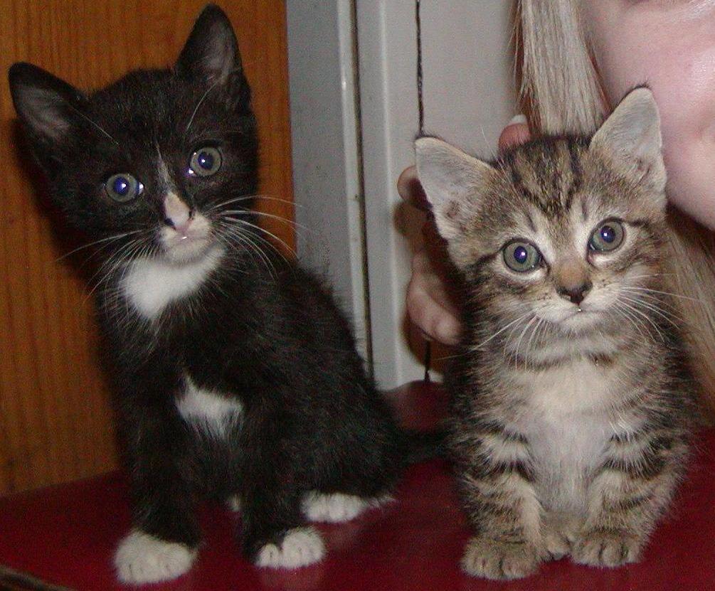 Cute Cats 1005x831 Wallpaper Teahub Io
