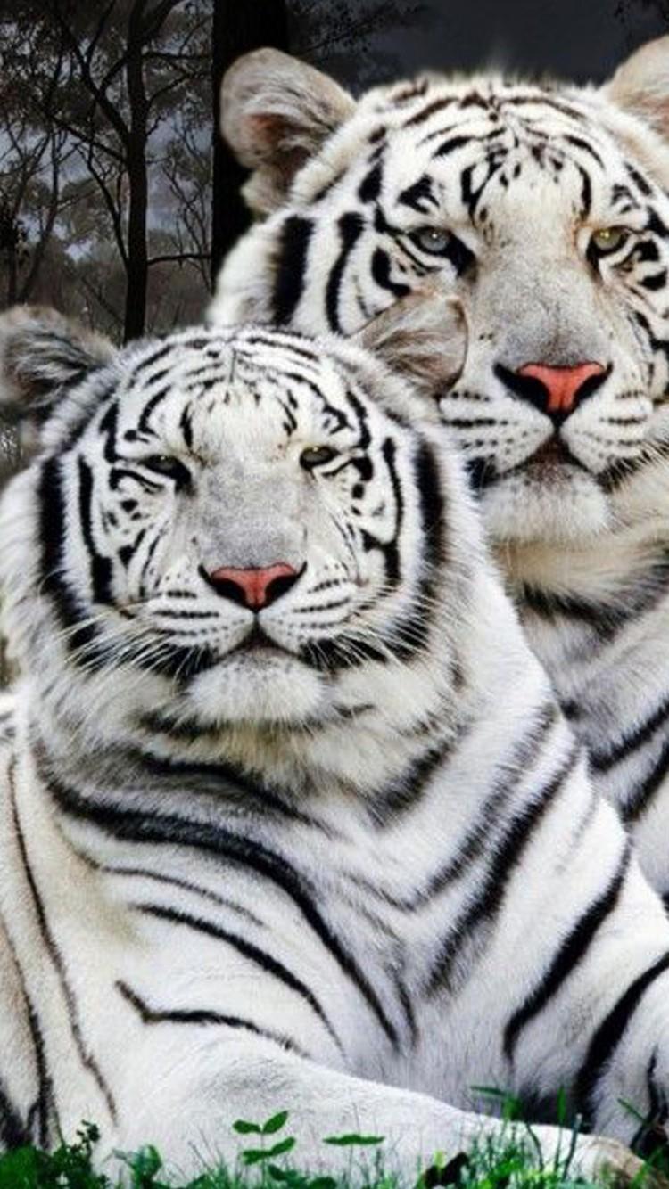 1080p White Tiger Wallpaper Hd 750x1334 Wallpaper Teahub Io