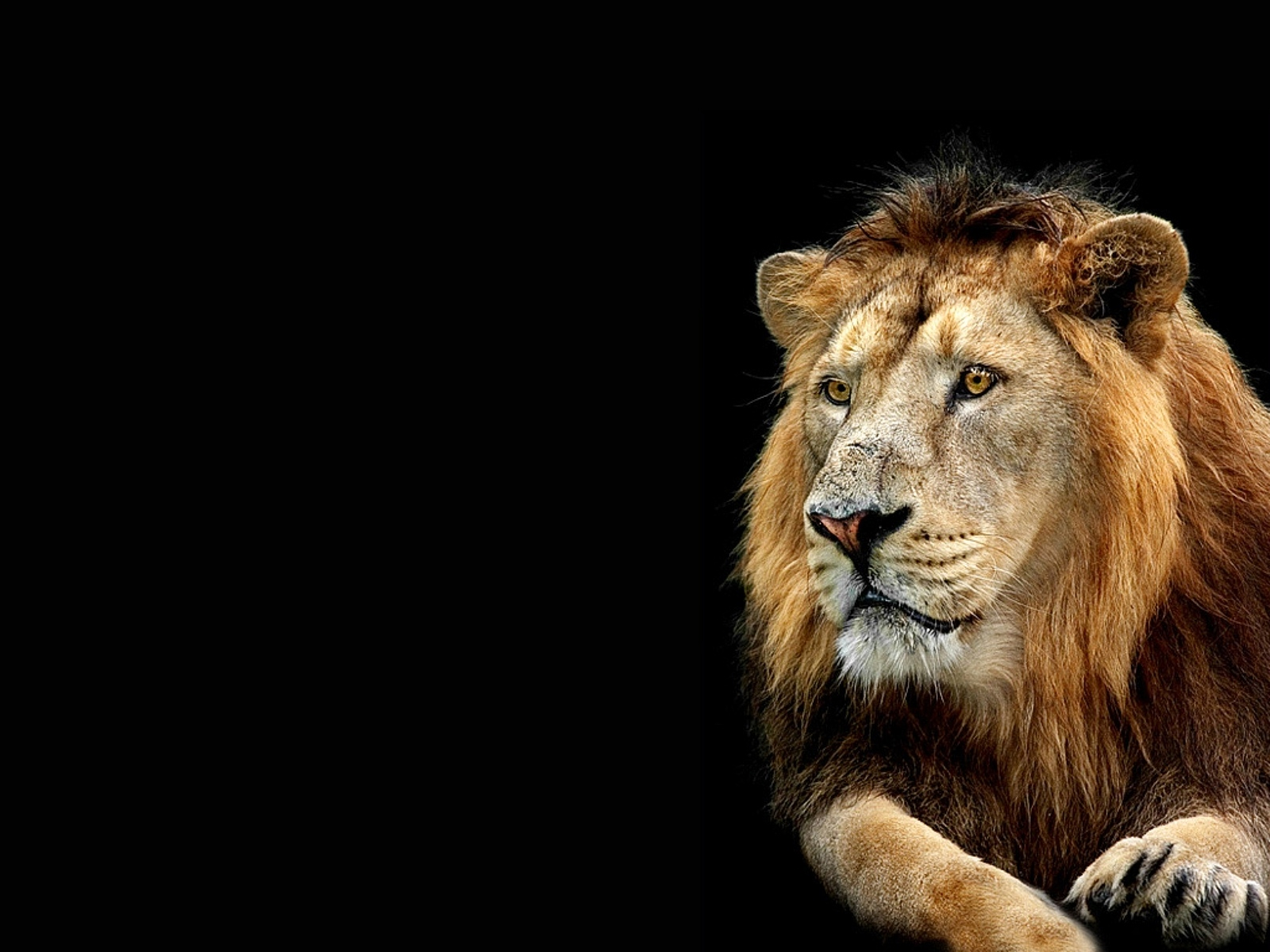 3d Wallpaper Desktop Backgrounds Lion Wallpapersafari - Lion Wallpaper With Quotes - HD Wallpaper