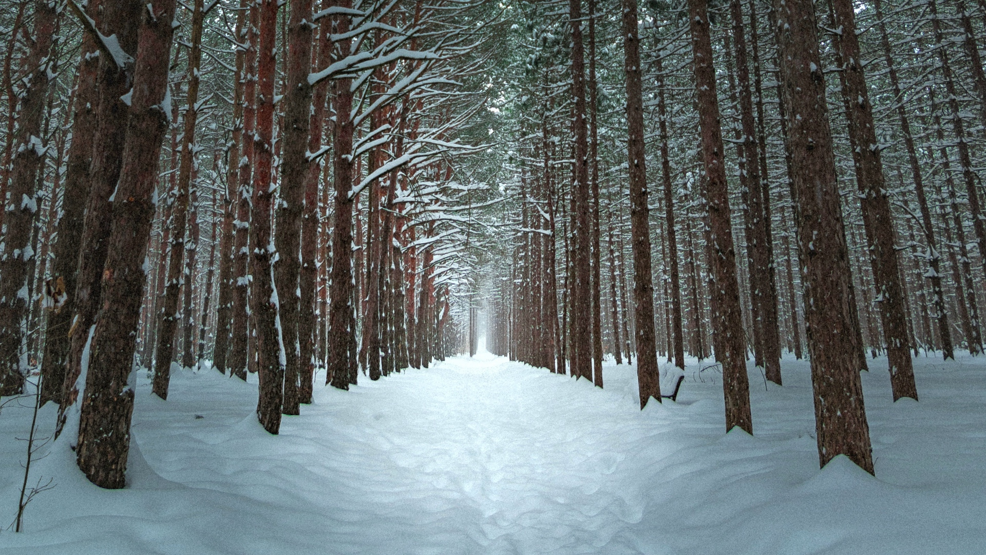 Wallpaper Winter, Forest, Trail, Snow, Trees - 1080p Winter Forest Background - HD Wallpaper