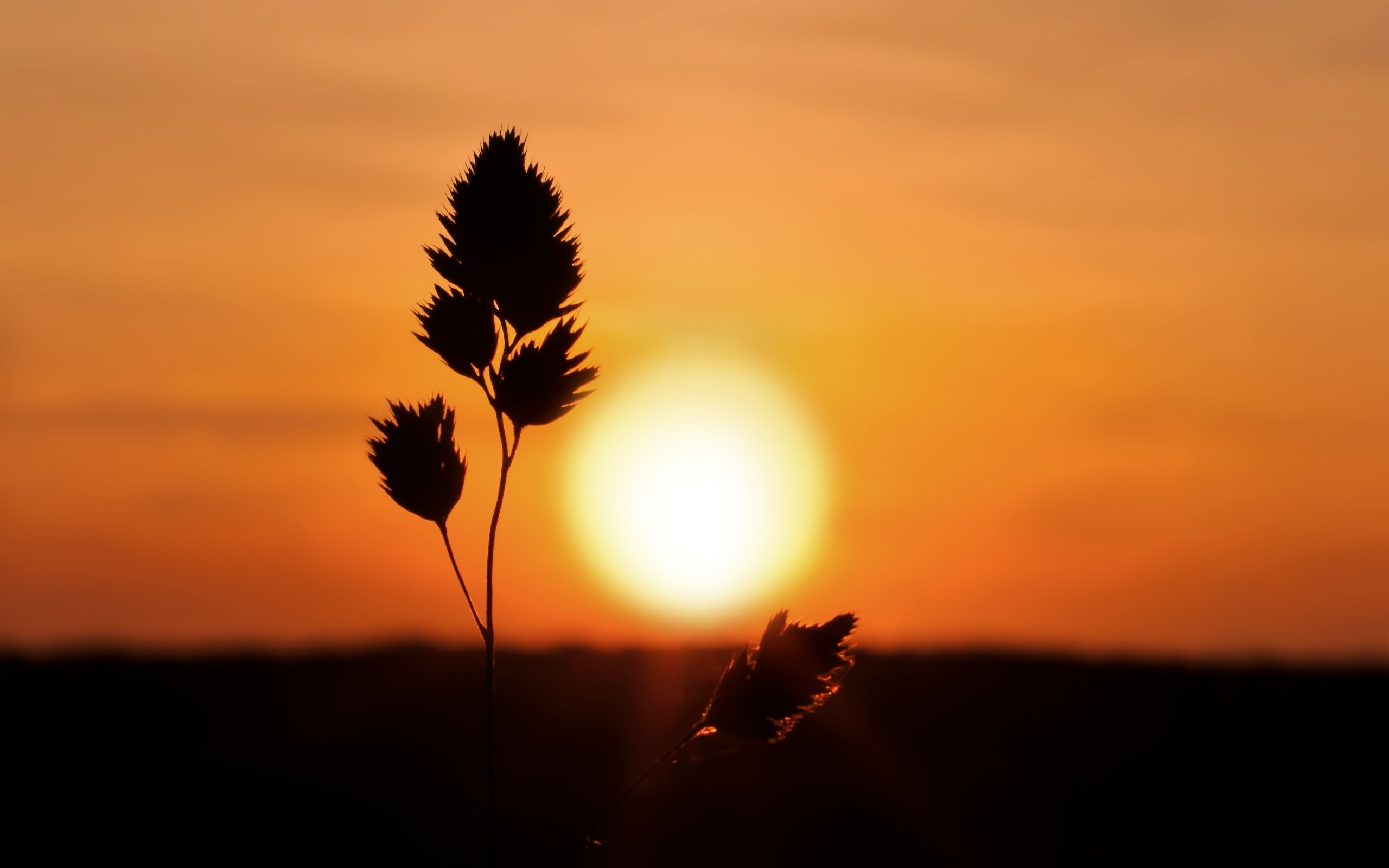 Sunset Tumblr,twig, Nature Wallpaper Full Hd, Nature - Full Hd Sun Set - HD Wallpaper
