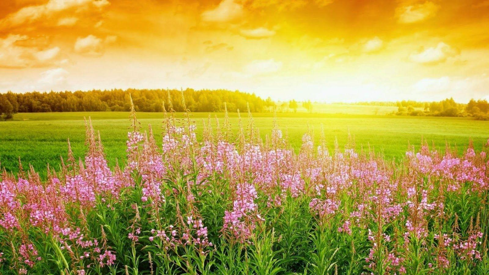 Full Hd Nature Wallpapers Free Download For Laptop - Summer Season In Pakistan - HD Wallpaper