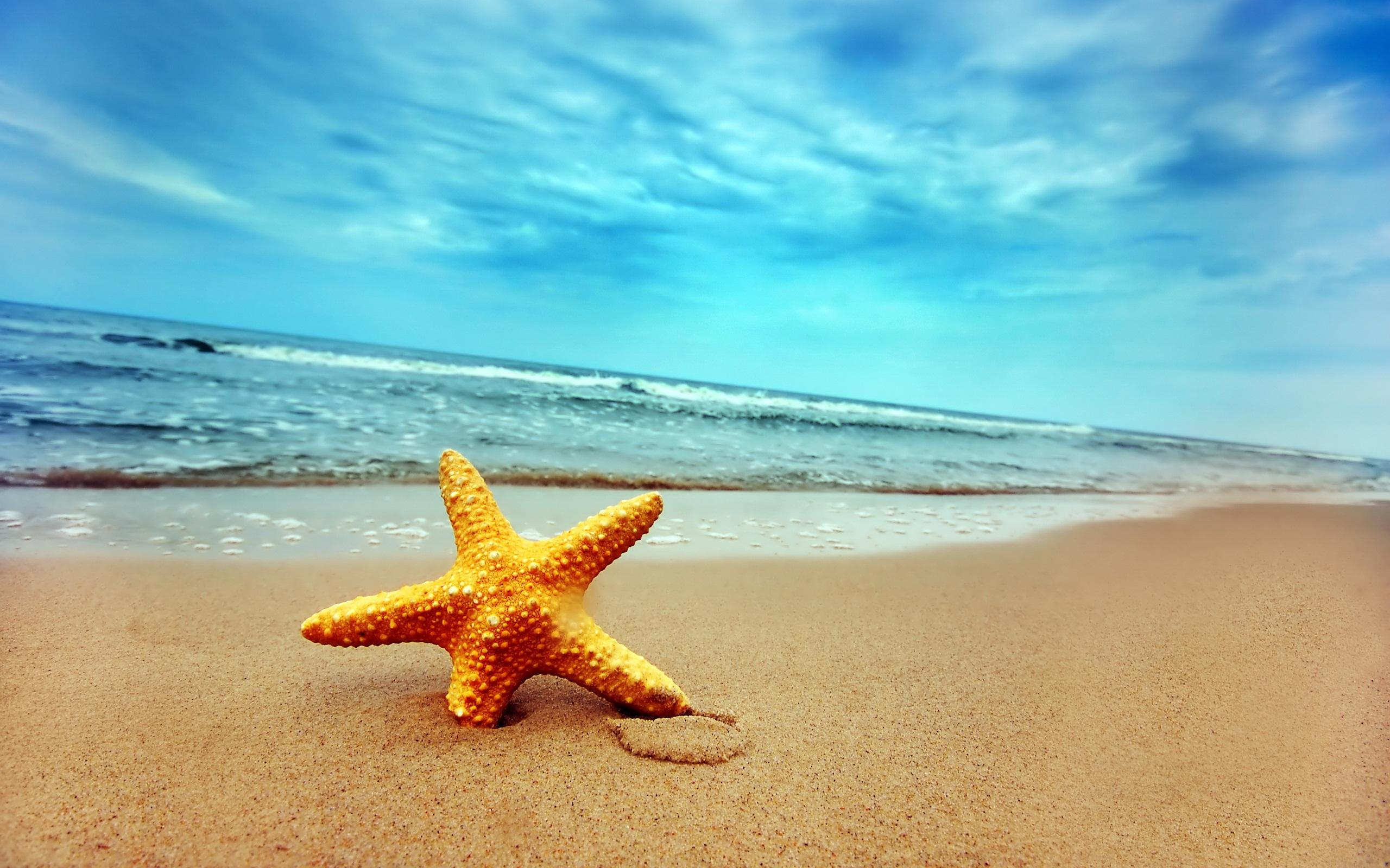 Beach Desktop Pictures S   Data-src /img/398631 - Beach High Resolution Starfish - HD Wallpaper