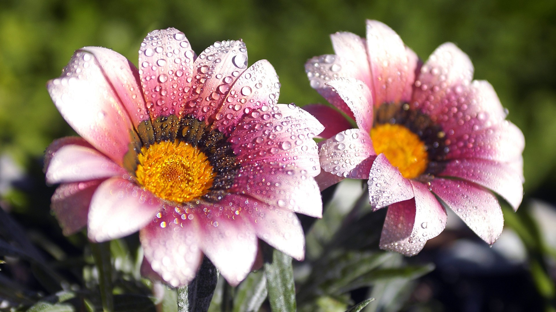 1920x1080, Beautiful Flowers Wallpapers For Desktop - All Flowers Image Download Hd - HD Wallpaper