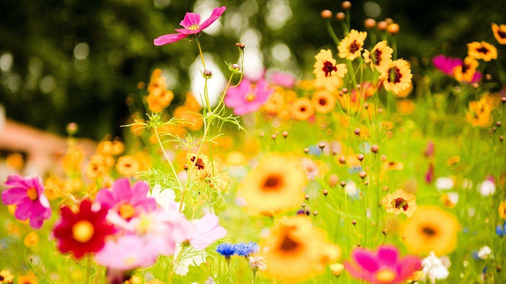 1920x1080, Field Of Yellow Flowers Wallpaper Hd - Summer Flowers - HD Wallpaper