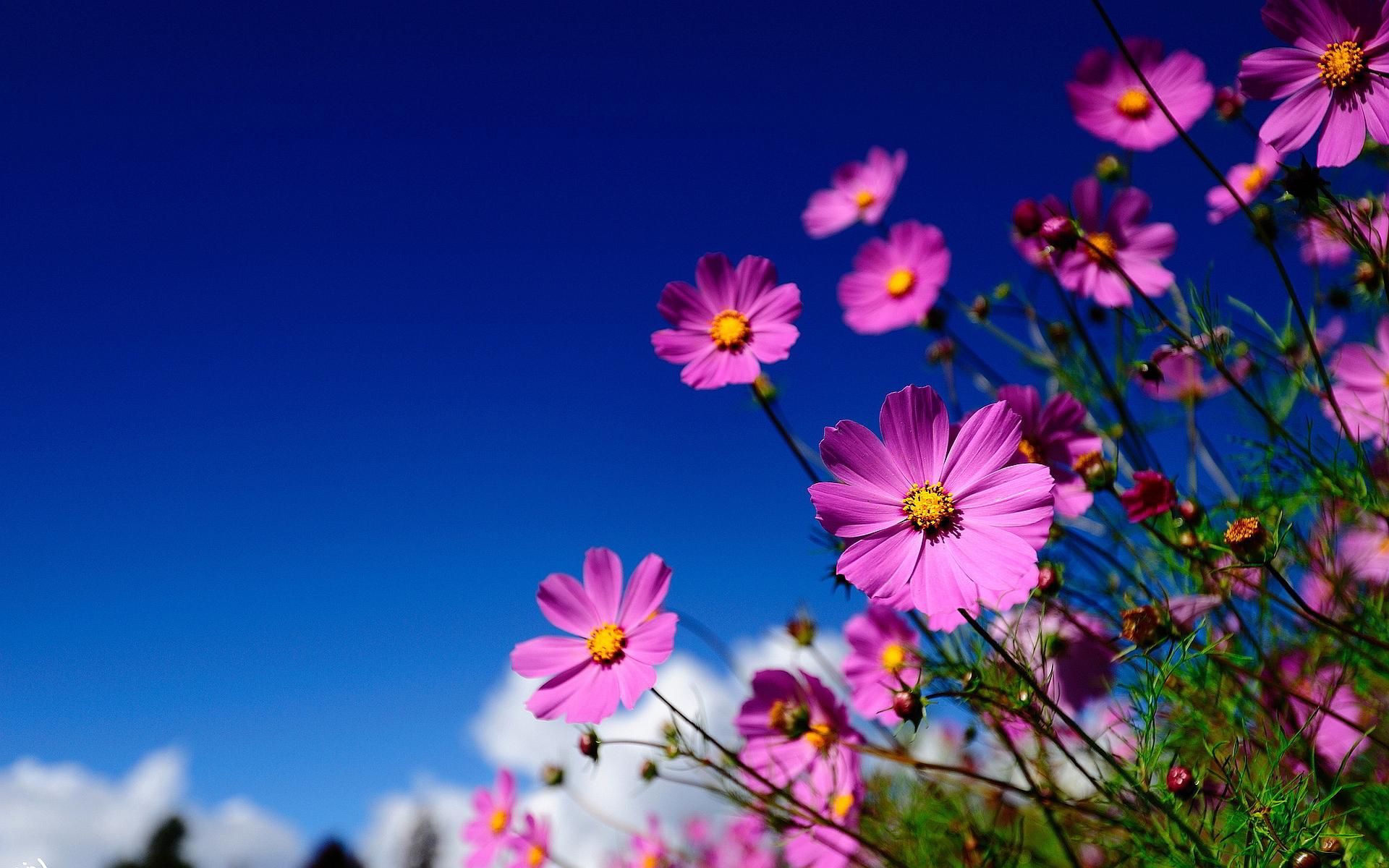Desktop Backgrounds Summer Flowers - HD Wallpaper