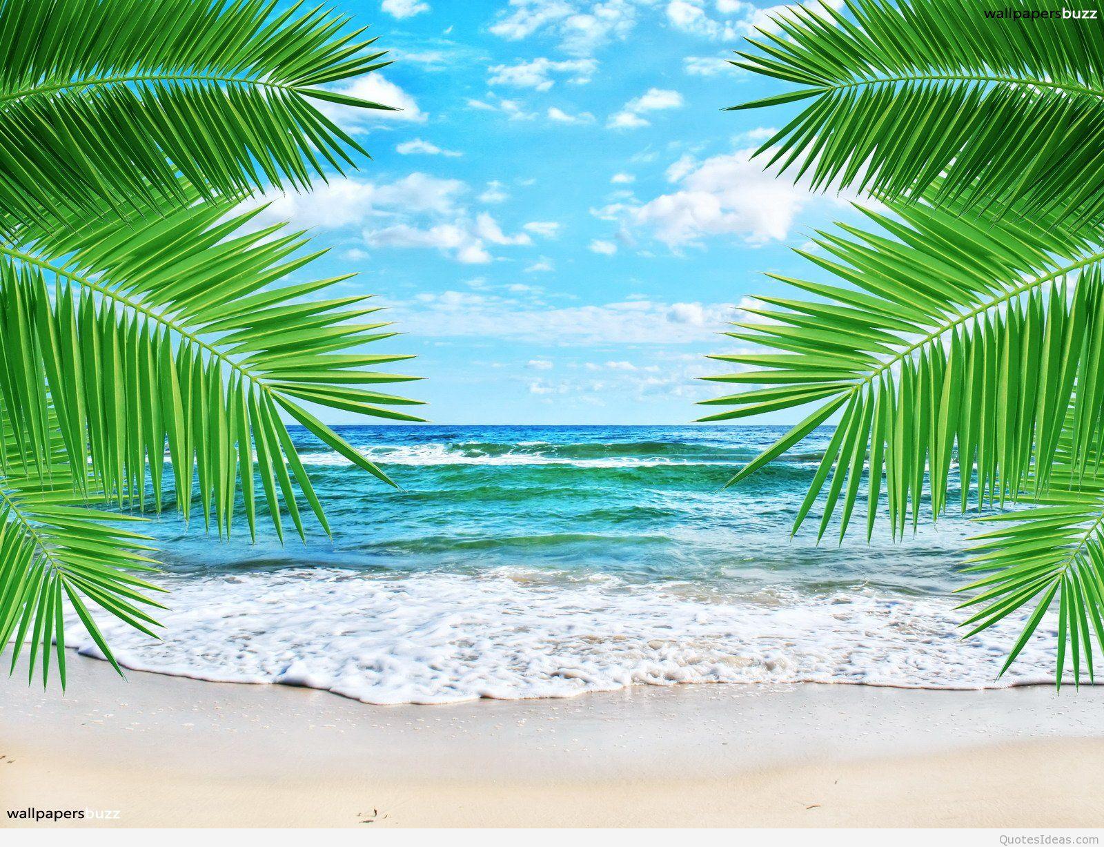 Summer Beach Wallpaper High Resolution Tropical Beach Background 1600x1227 Wallpaper Teahub Io