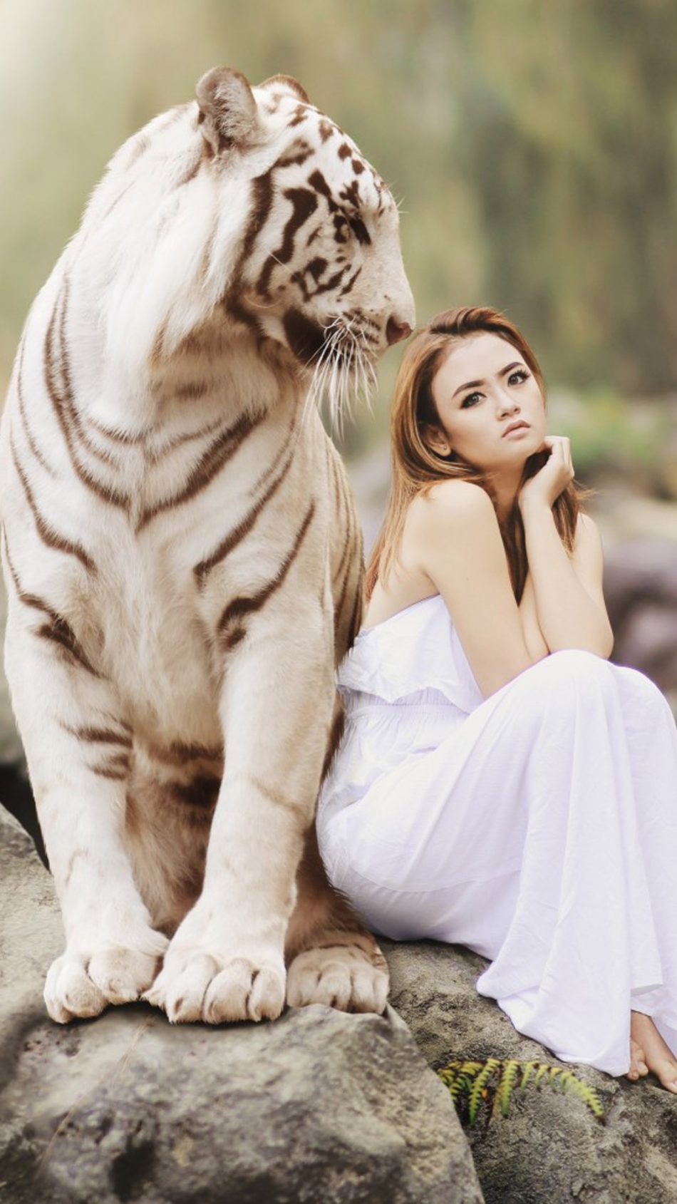Asian Model With White Tiger Photoshoot Hd Mobile Wallpaper White Tiger With A Girl 950x1689 Wallpaper Teahub Io