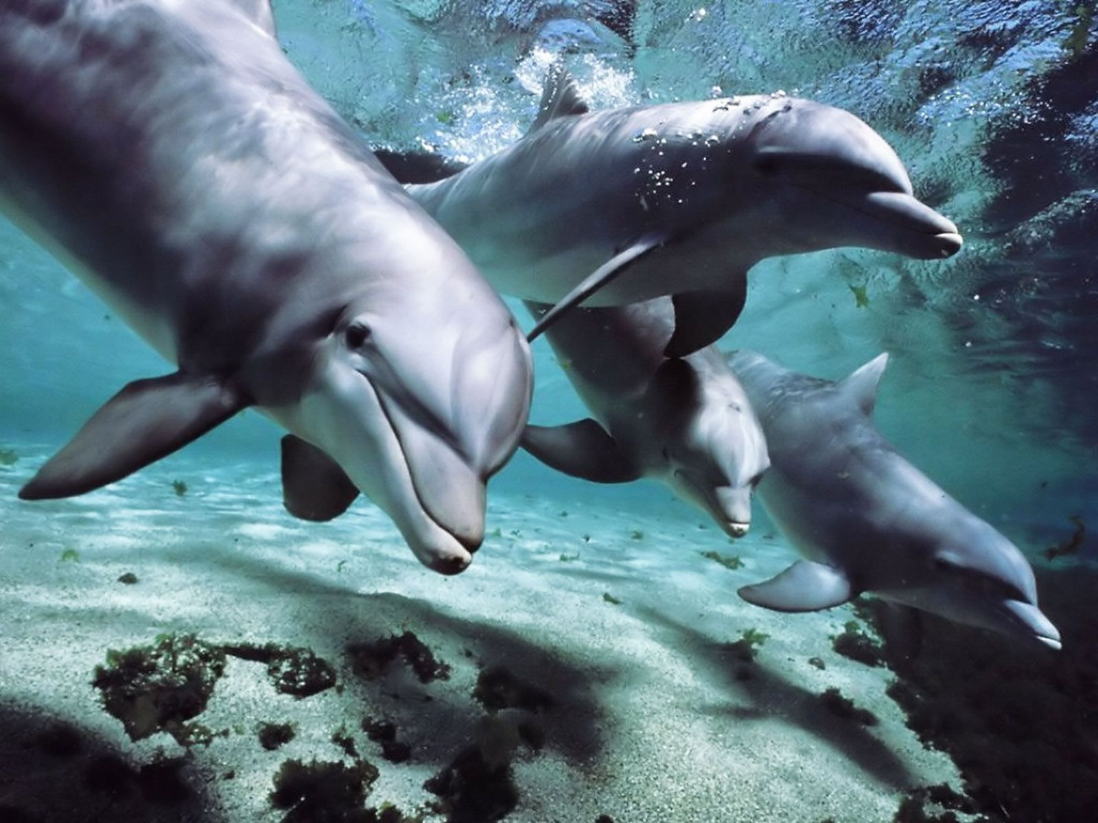 Jumping Dolphin Hd Desktop Wallpaper High Definition - Beautiful Pictures Of Animals And Nature - HD Wallpaper