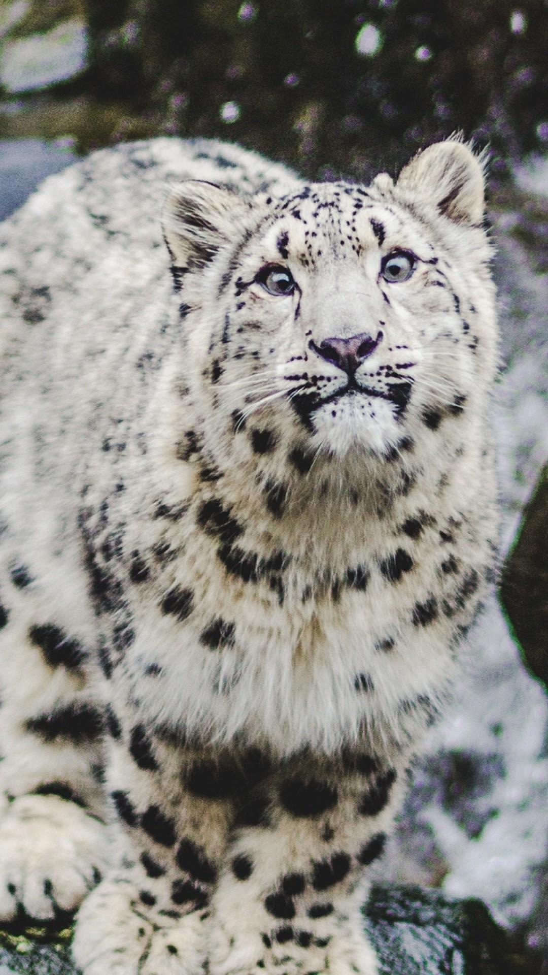Snow Leopard 1080x1920 Wallpaper Teahub Io