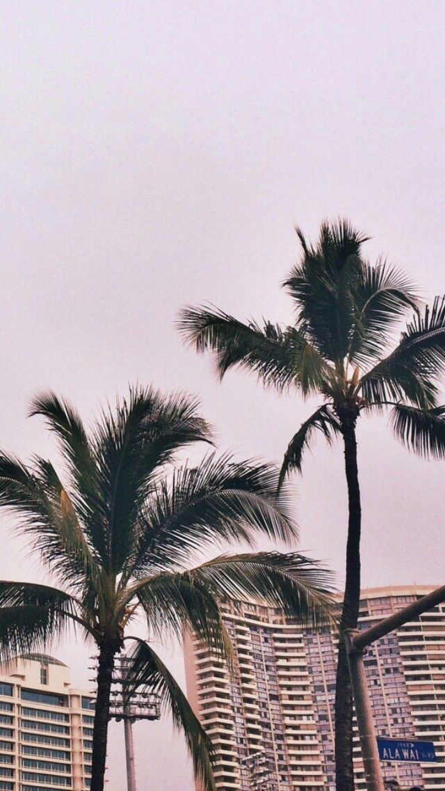 Wallpaper, Background, And Pink Image - Iphone Wallpaper Tumblr Palm Trees - HD Wallpaper