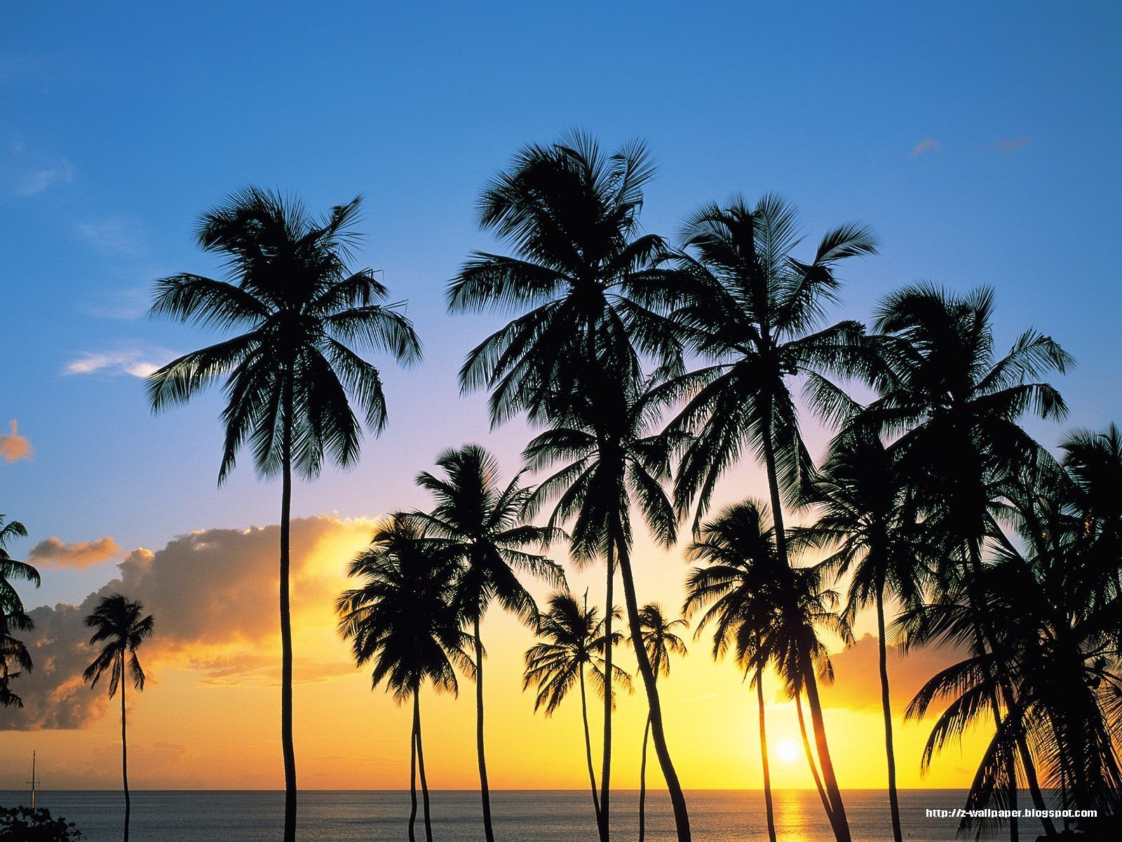 California Palm Trees Background - HD Wallpaper
