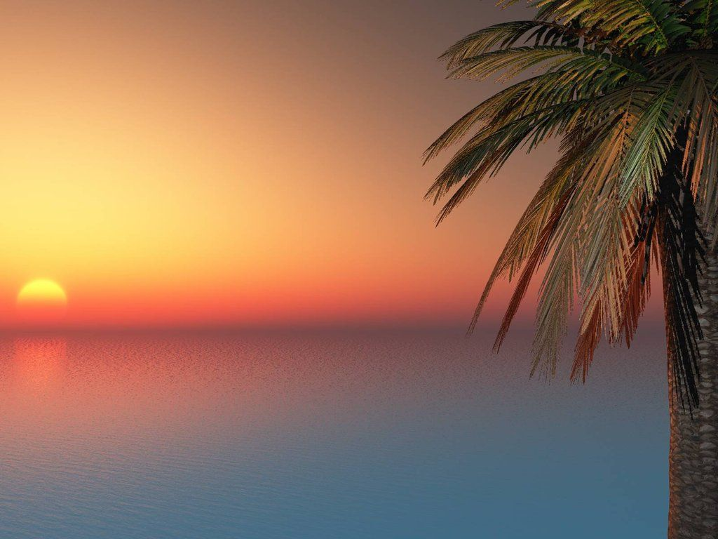 Palm Trees Sunset Tumblr California Palm Palm Trees - Backgrounds Of Sunsets With Palm Tres - HD Wallpaper