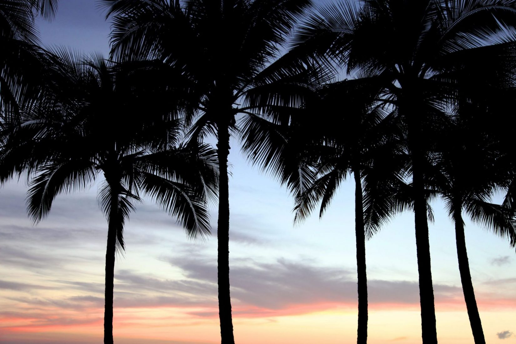 Desktop Background Palm Trees - HD Wallpaper