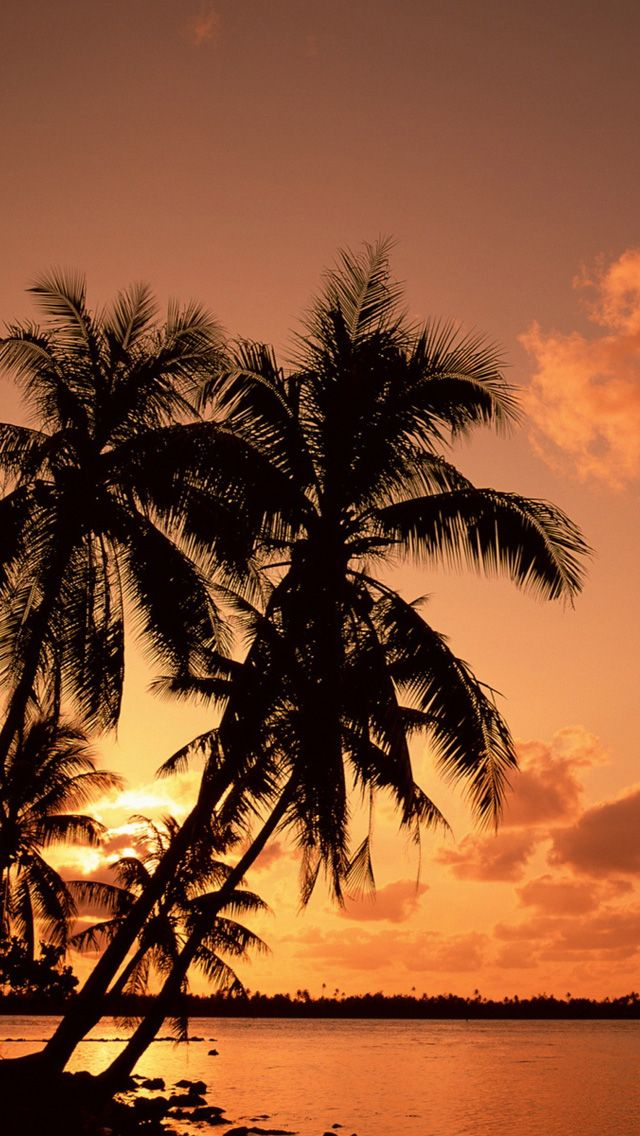 Palm Tree Background Iphone 6 - HD Wallpaper
