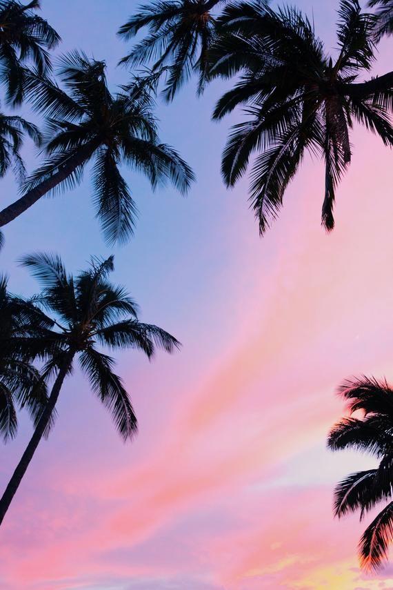 Palm Tree Background - HD Wallpaper