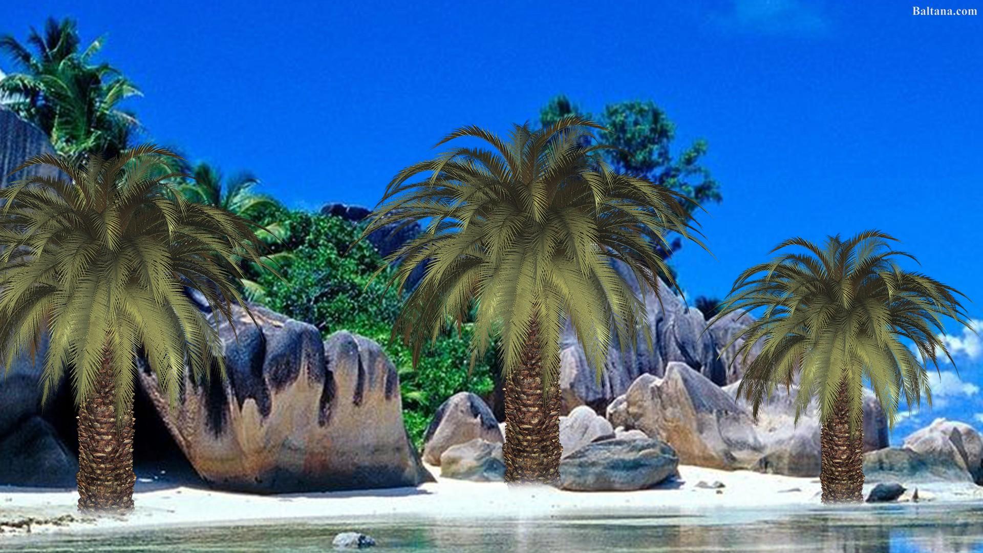 Palm Tree Hd Desktop Wallpaper - Tours Sri Lanka Banner - HD Wallpaper