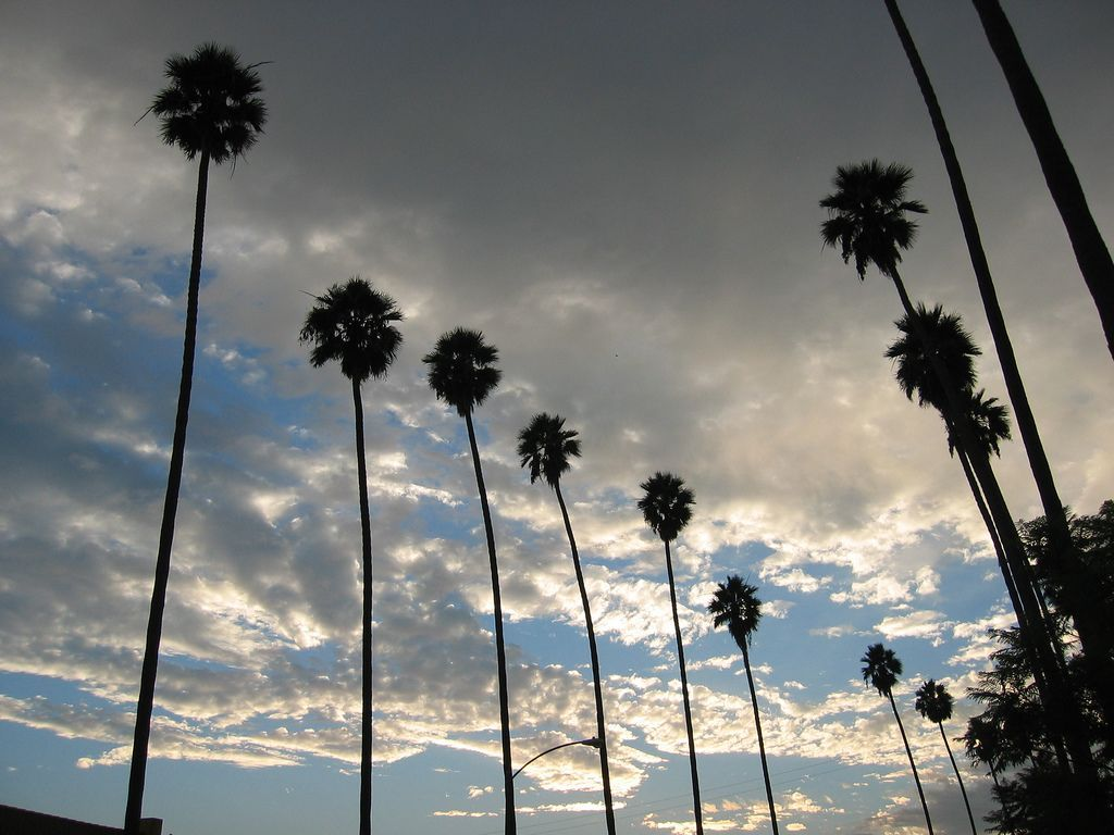 55 Los Angeles Palm Trees Wallpapers - Palm Trees Los Angeles Skyline - HD Wallpaper