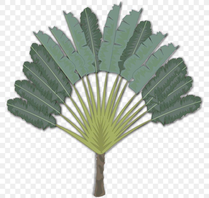 Palm Trees Clip Art Ravenala Madagascariensis Desktop - Ravenala Png - HD Wallpaper