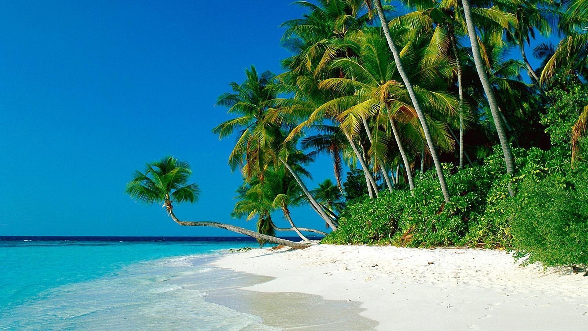 Tropical, Palm, Beach, Wide, High, Definition, Wallpaper, - Ocean And Palm Trees - HD Wallpaper