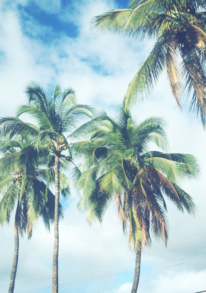 Palm Trees Tumblr Backgrounds - HD Wallpaper