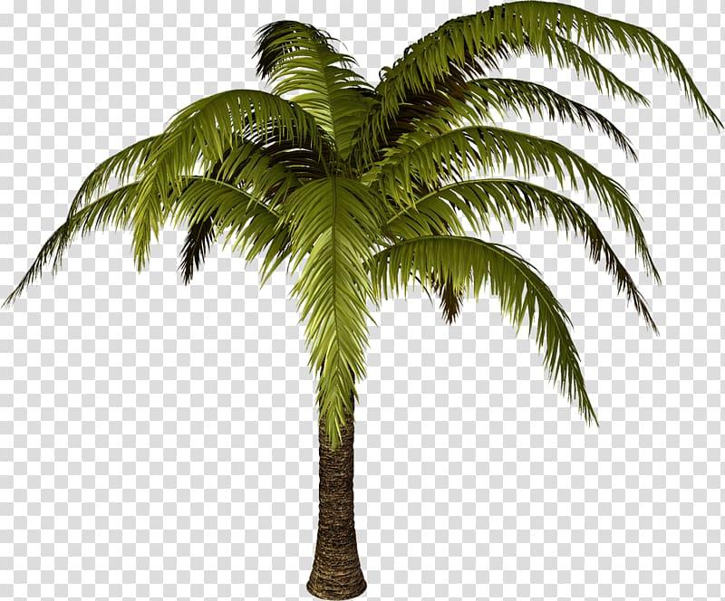 Tree Scape Desktop , Palm Tree Transparent Background - Transparent Background Santa Hat - HD Wallpaper